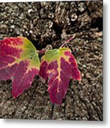Natures Detail Metal Print by Cindy Rubin