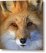 Nature's Eyes Metal Print