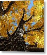 Nature's Gold Metal Print