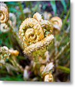 Natures Knot-how To Twist Metal Print