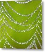 Natures Pearls  Metal Print