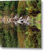 Natures Reflection Metal Print by Mark Papke