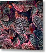 Nature's Rich Tapestry Metal Print