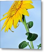 Nature's Sunshine Metal Print