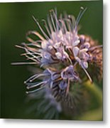 Natures Treasures Metal Print