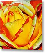 Nature's Vivid Colors Metal Print