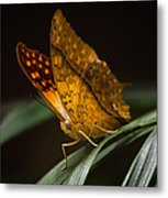 Nature's Wonders  Metal Print