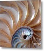 Nautilus Wave Metal Print