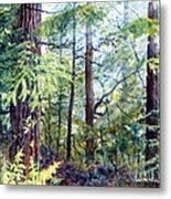 Navarro River Redwoods Metal Print