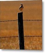 Nebraska's Bird Metal Print