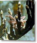 Neck Crab - Macro Undersea Reef Life Metal Print