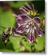 Nectar Delivery Metal Print