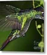 Nectar Feeding Hummingbird Metal Print