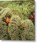 Nemo Family Metal Print