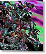 Neon Coleus Metal Print