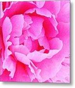 Neon Pink Peony Metal Print