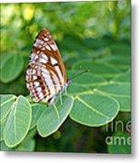 Neptis Hylas / Common Sailer Butterfly Metal Print