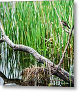 Nest Building Metal Print