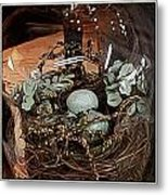 Nest In Cloche Metal Print