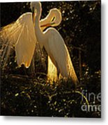 Nesting Pair Of Snowy Egrets Metal Print