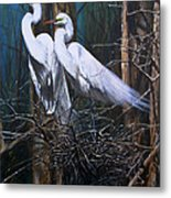Nesting Snowy Egrets Metal Print