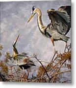 Nesting Time Metal Print by Debra and Dave Vanderlaan