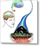 Neurotransmitters And The Brain Metal Print