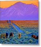 Wild Horse Country  Metal Print by Jeanne  Bencich-Nations