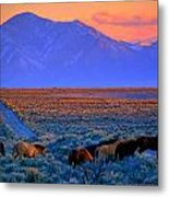 Nevada  Metal Print by Jeanne  Bencich-Nations