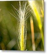 Nevada Plant Life Metal Print