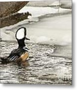 Never Too Cold To Mate Metal Print by Ilene Hoffman