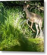 New Buck Metal Print