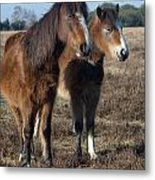 New Forest Ponies Metal Print