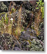 New Growth In A Desolate Area Metal Print