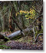 New Growth In An Old Forest Metal Print