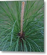 New Growth In Life Metal Print