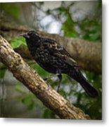 Red Winged Blackbird - New Heights - 06.04.2014 Metal Print