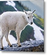 New Life In The High Country Metal Print
