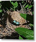 New Life - Robin's Nest Metal Print