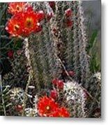 New Mexico Cactus Metal Print