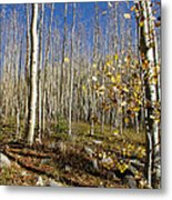 New Mexico Series -  Bare Autumn Metal Print