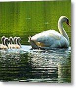 New Mute Swan Family In May Metal Print