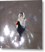 New Orleans - Swamp Boat Ride - 1212113 Metal Print by DC Photographer