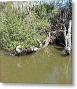 New Orleans - Swamp Boat Ride - 1212142 Metal Print
