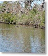 New Orleans - Swamp Boat Ride - 1212157 Metal Print