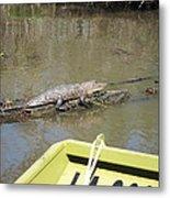 New Orleans - Swamp Boat Ride - 1212160 Metal Print
