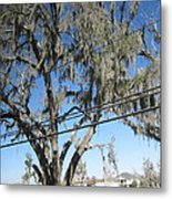New Orleans - Swamp Boat Ride - 12122 Metal Print by DC Photographer