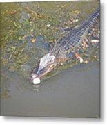 New Orleans - Swamp Boat Ride - 121260 Metal Print