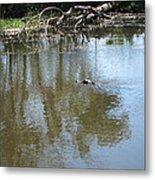 New Orleans - Swamp Boat Ride - 121264 Metal Print