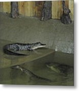 New Orleans - Swamp Boat Ride - 12127 Metal Print